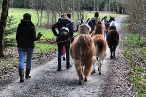 Teamtag mit Lamas